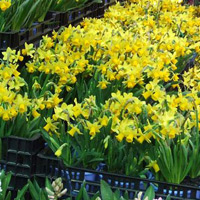 Beautiful seasonal bulbs and plants