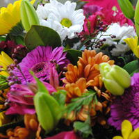Fresh flowers, bright colours