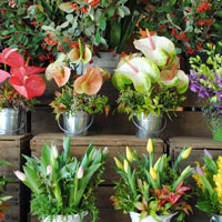 Gifts and Arrangements for all occasions