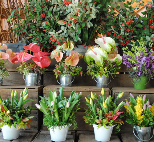 Farm Fresh Flowers for all occasions